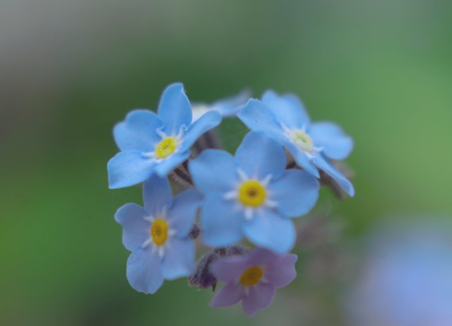 Tiny little flowers.(windy weather) Learning macro photography with close up filter lens . Learning how to focus.