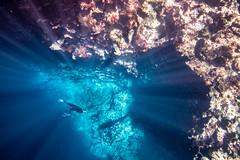 Free diving in Tonga