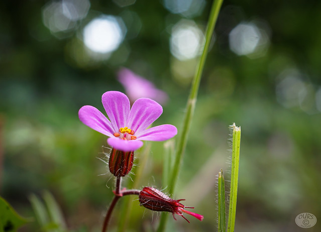 Tiny grass flower, to enjoy the small things this week