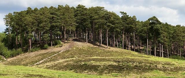 The Bourne Woods near Farnham,Surrey