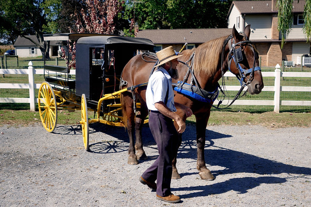 Pennsylvania 2019, Amish Country Amish readying our buggy