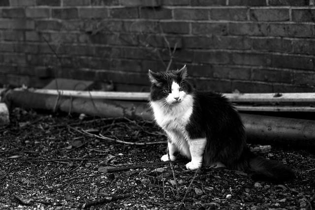 Fluffy Cat Visit