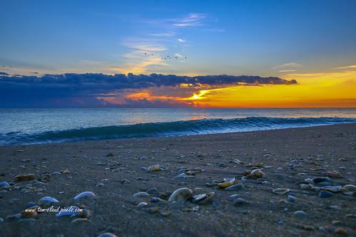 sun sunrise sky bluesky clouds cloudy weather horizon water ocean atlantic beach shore shoreline surf shells seashell morning dawn nature mothernature seascape outdoors hutchinsonisland jensenbeach martincounty florida usa sand explore explored