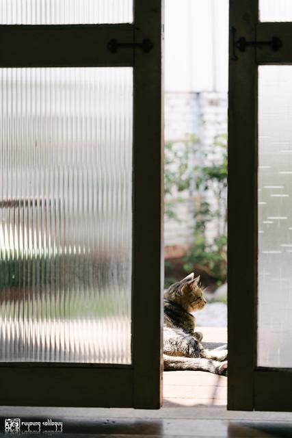 散步攝影:老宅,常日初夏 | 02