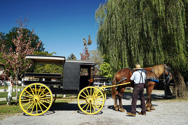 Pennsylvania 2019, Amish Country Amish paradise buggy ride
