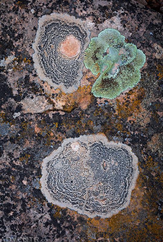 Lichen Spots