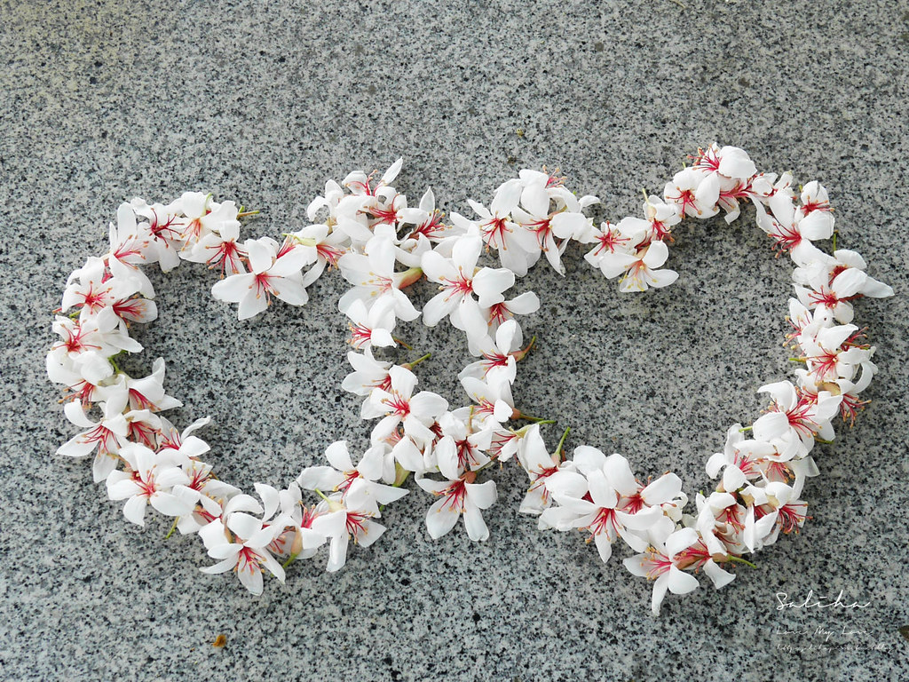 台北汐止小南港山 賞桐花101基隆河必爬必走輕鬆登山步道分享推薦 (2)