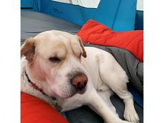 4-legged camper 2