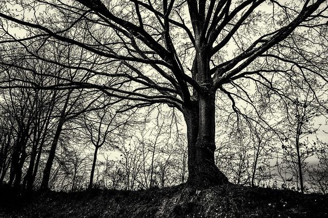 Bare tree branches -Scherpenheuvel - Belgium