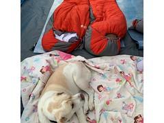 4-legged camper