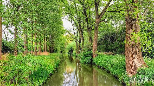 Watergang, Odijk, Netherlands - 3505
