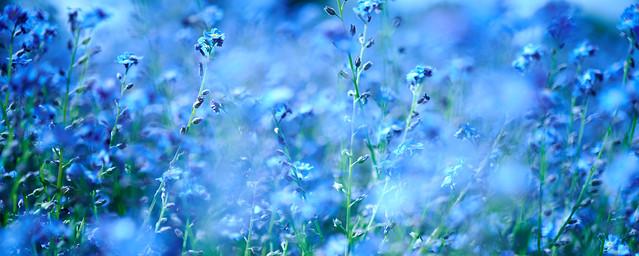 bluekeh