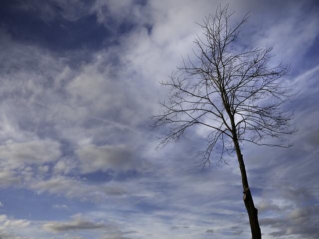 Bare trees in a picturesque landscape Zichem - Belgium