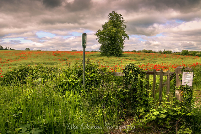 Gateway To The Poppies (Revisited).