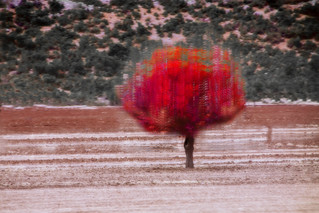 a red tree
