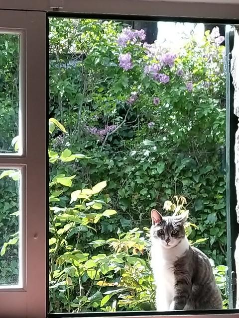 Los Molinos desde mi ventana