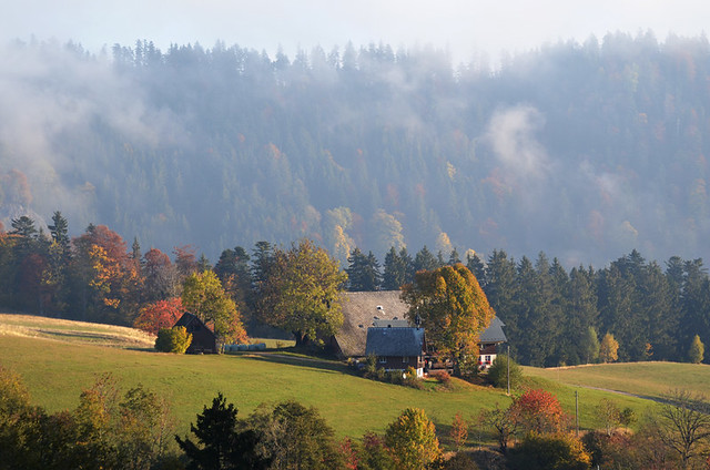 Early morning in the Black Forest, Germany