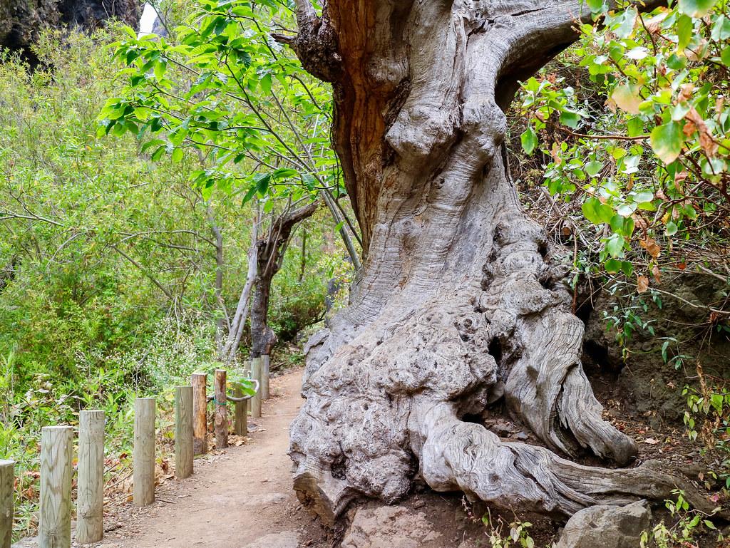 Tronco de árbol en el Barranco del Infierno