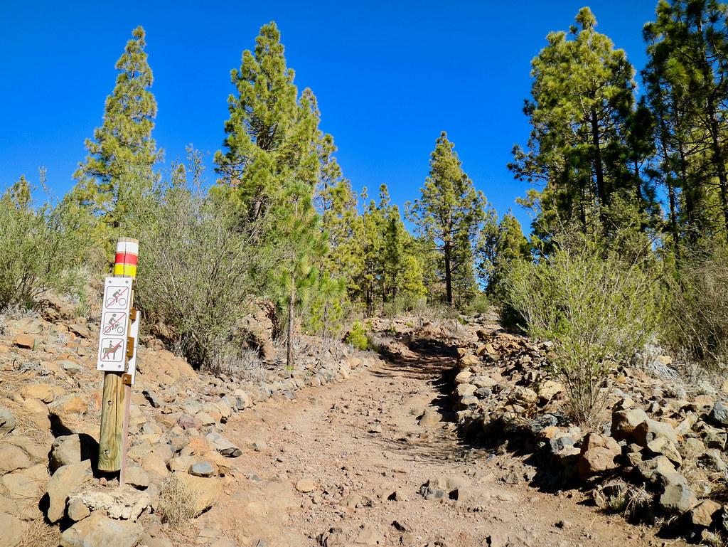 Sendero hacia el Paisaje Lunar en la Corona Forestal de Tenerife