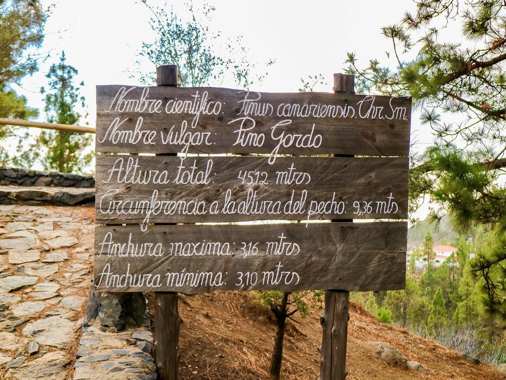 Letrero sobre el pino gordo de Vilaflor en Tenerife