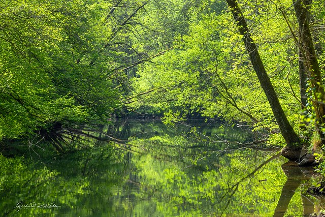 Spring on the river - a green hell!