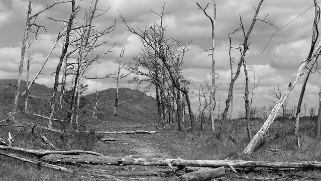 Deadwood Forrest explore 12-05-2020