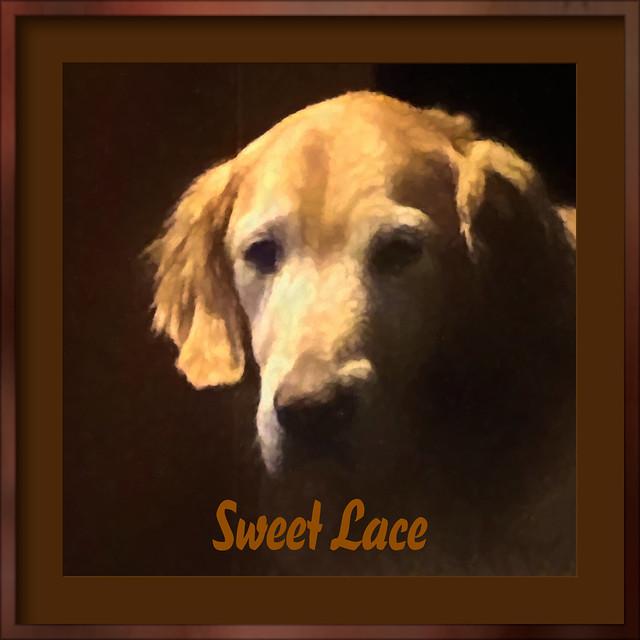Sweet Lace