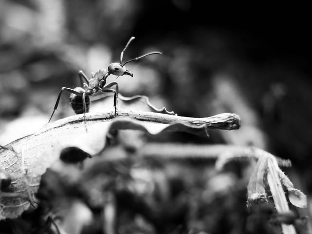 Ant at eye level ...