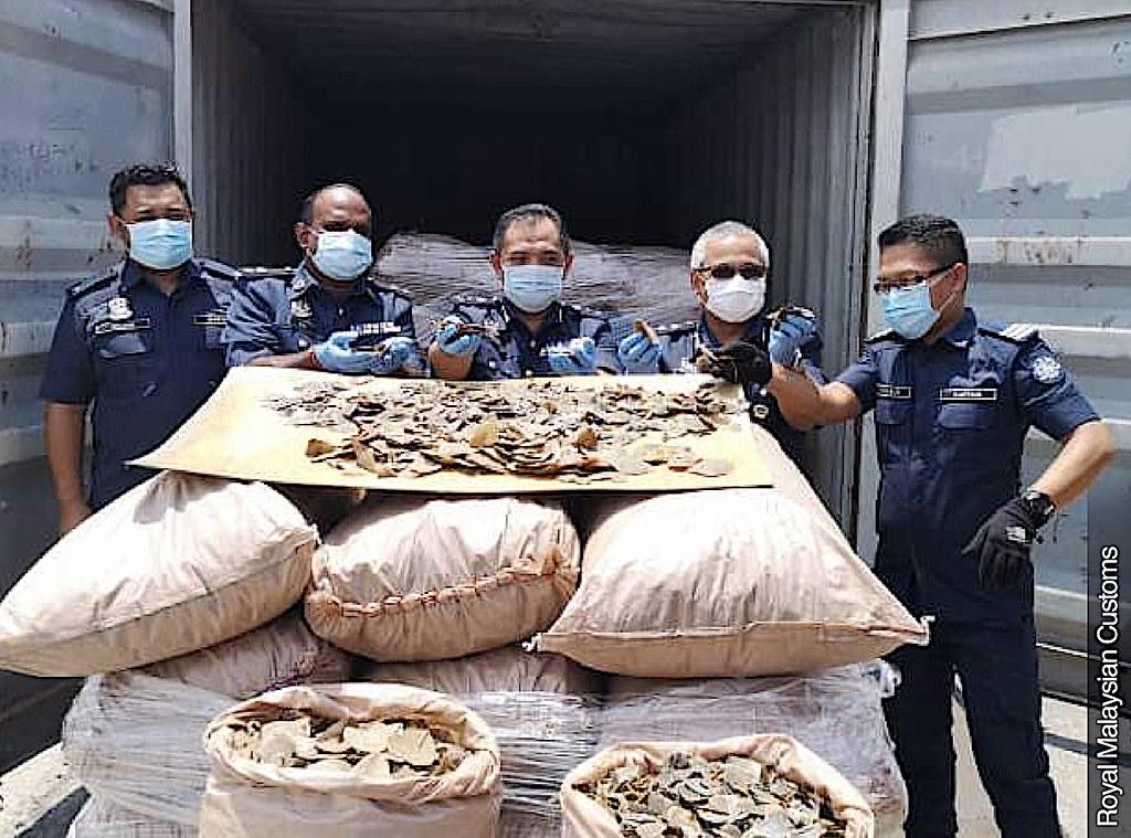 馬來西亞海關查獲穿山甲鱗片