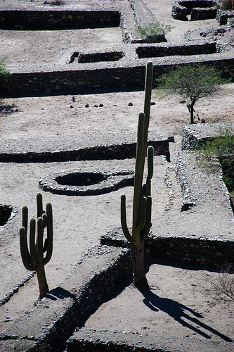 Multi-armed cacti at Quilmes ruins in Argentina