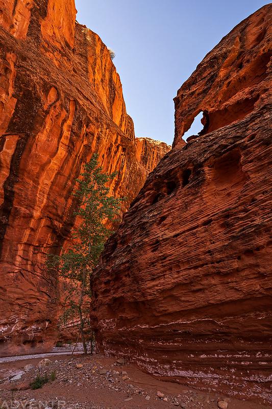 Canyon Bend Arch
