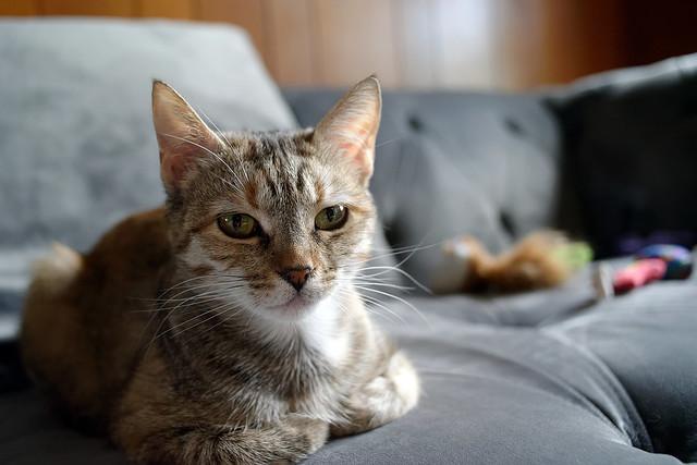 Jane on the sofa