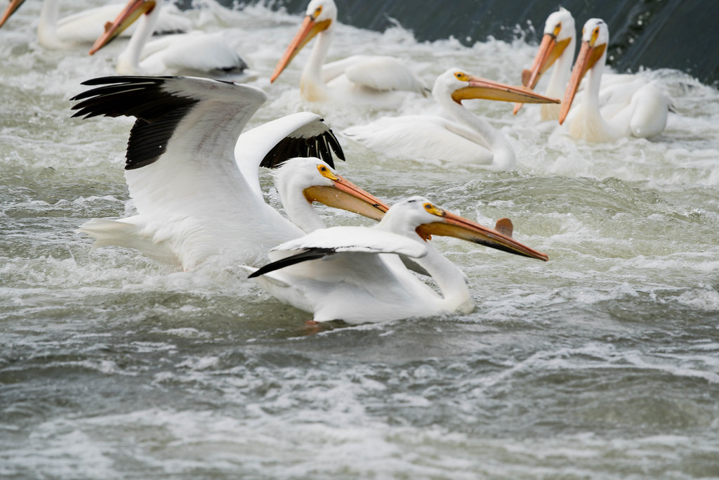 Flock 1 (1 of 1)