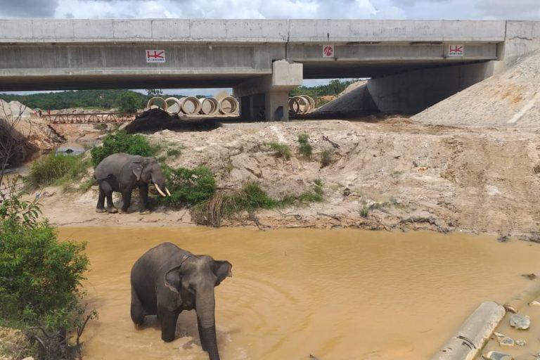 廖內省高速公路設置的生態廊道,讓野生動物可以來往道路兩端的棲地。圖片來源:廖內省自然資源保護局(Riau Conservation Agency, BKSDA)提供(Mongabay)
