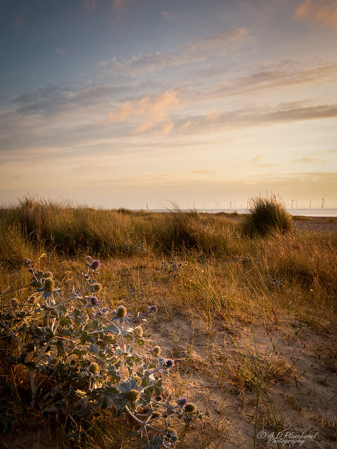 The dunes at dawn