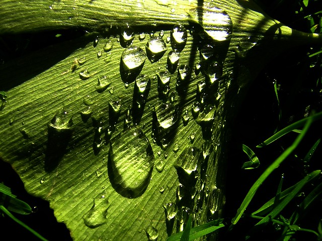 droplets clinging on