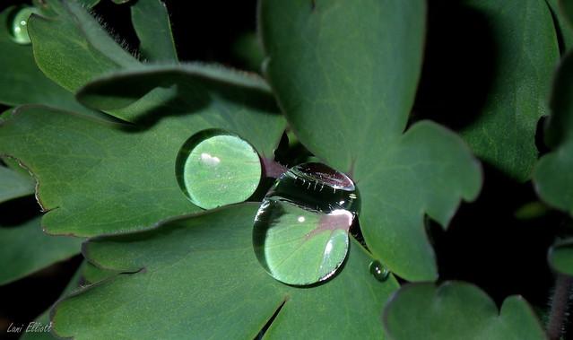 Glassy Classy Droplets