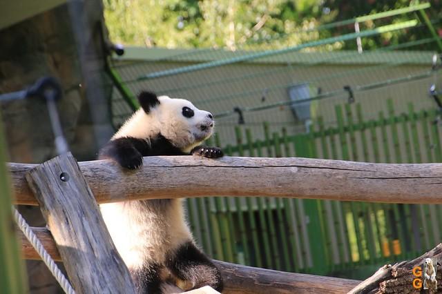 Tierpark+Zoo Berlin 09.05.2020 Wassermark150