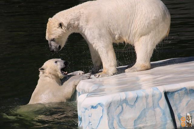 Tierpark+Zoo Berlin 09.05.2020 Wassermark053