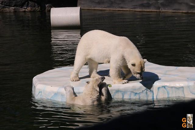 Tierpark+Zoo Berlin 09.05.2020 Wassermark044