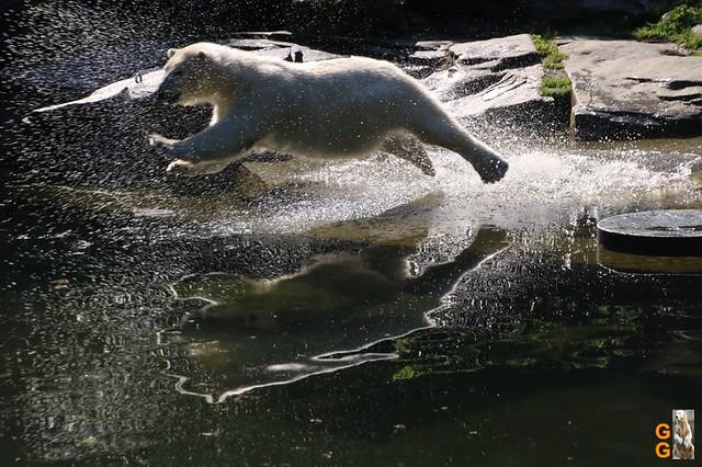 Tierpark+Zoo Berlin 09.05.2020 Wassermark023