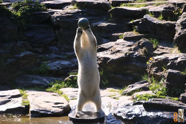 Tierpark+Zoo Berlin 09.05.2020 Wassermark017