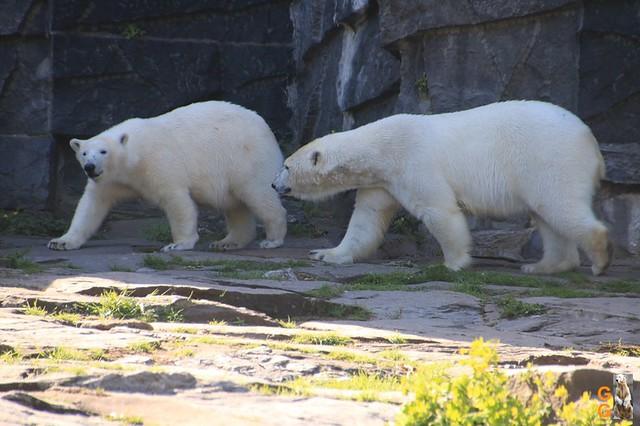 Tierpark+Zoo Berlin 09.05.2020 Wassermark003