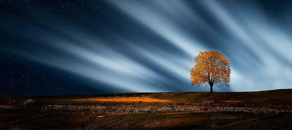 Y…  las estrellas bajaron a la tierra