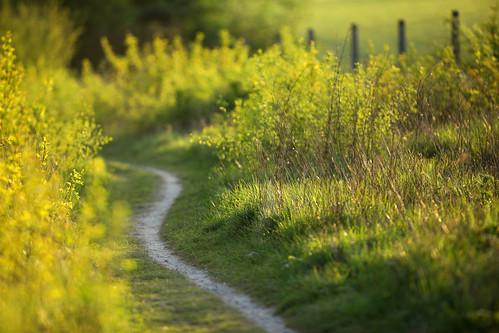Downland Path