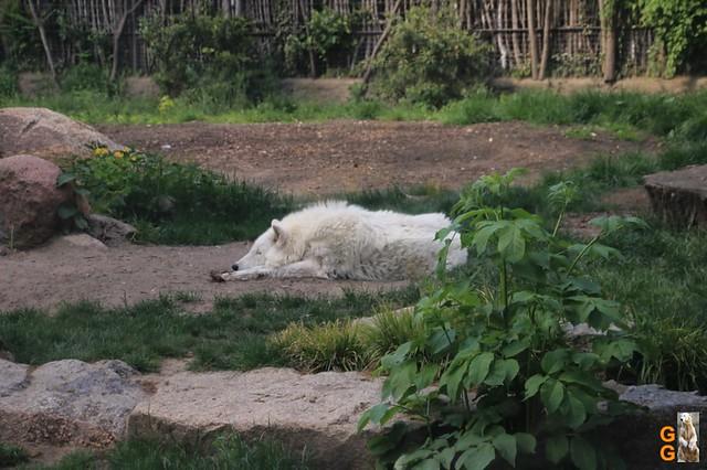 Tierpark+Zoo Berlin 09.05.2020 Wassermark137