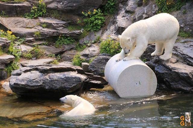 Tierpark+Zoo Berlin 09.05.2020 Wassermark121