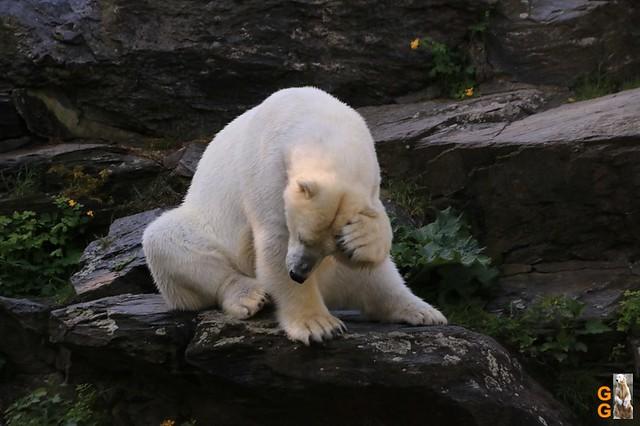 Tierpark+Zoo Berlin 09.05.2020 Wassermark030
