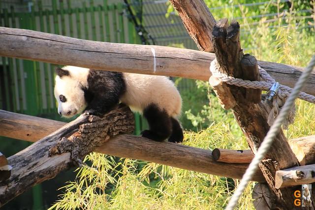 Tierpark+Zoo Berlin 09.05.2020 Wassermark146