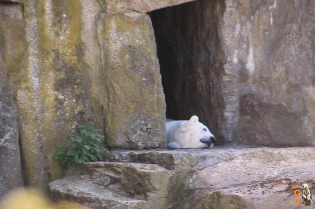 Tierpark+Zoo Berlin 09.05.2020 Wassermark138